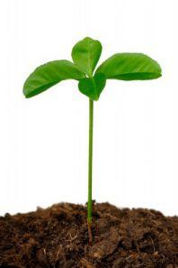 Кислотность почвы определить самостоятельно